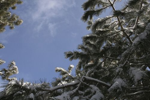 Oregon blue sky snow